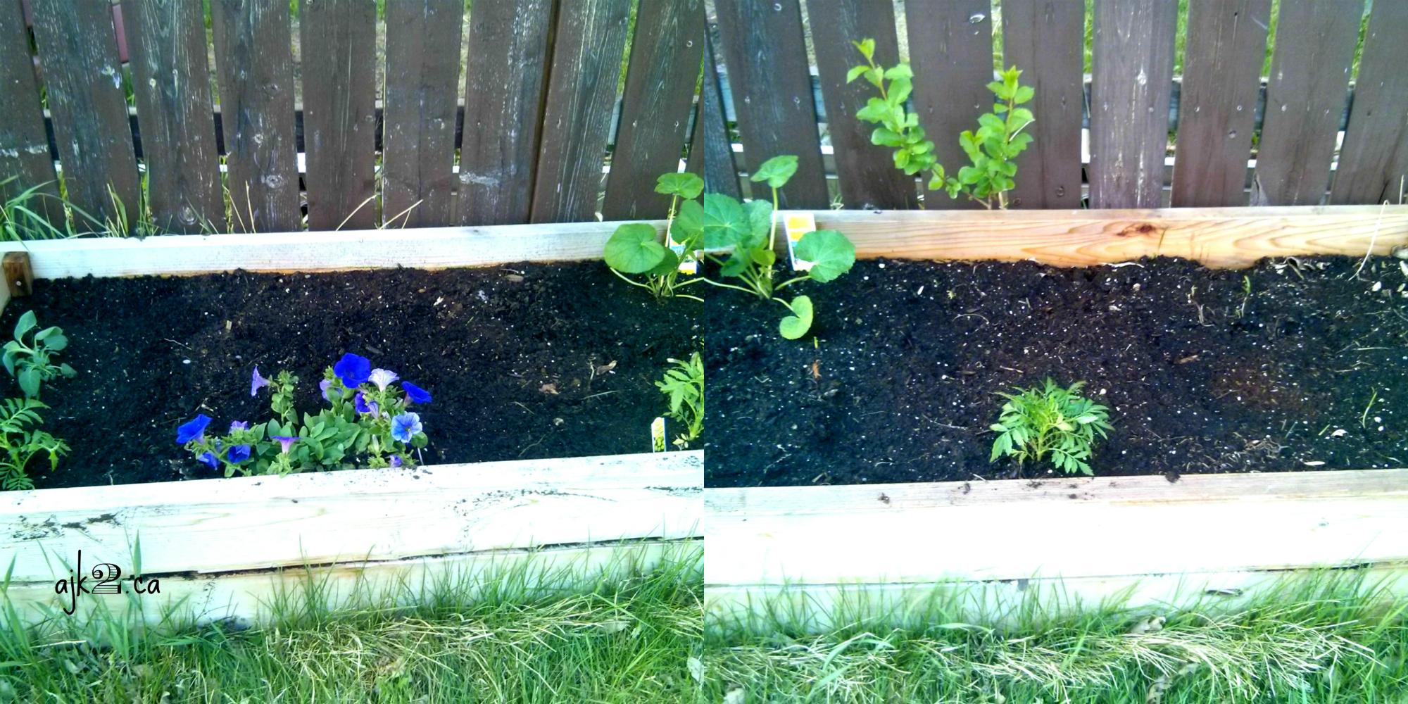 Garden Bed #3